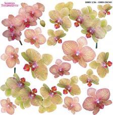 Sospeso transparente prediseñado Orchid Green 23x23 cm