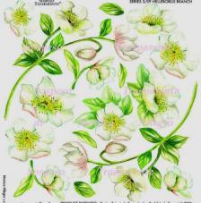 Sospeso transparente prediseñado Helleborus Branch 23x23 cm