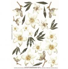 Paper decoupage helleboro blanca  35x50 cm