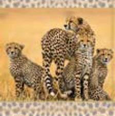 20 servilletas. Leopardos