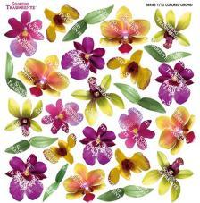 Sospeso transparente prediseñado Colored Orchid 23x23 cm