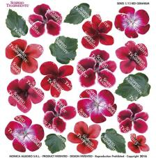 Sospeso transparente prediseñado Red Geranium 23x23 cm