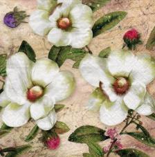 20 servilletas. Magnolias Blancas