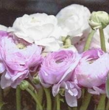 20 servilletas. Flor rosa y blanca