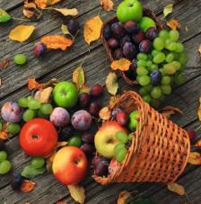20 servilletas. Frutos otoño