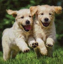 20 servilletas. Cachorros