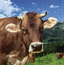20 servilletas. Vaca