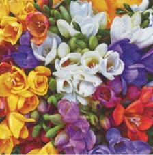 20 servilletas. Floral