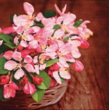 20 servilletas. Cesta flores de primavera