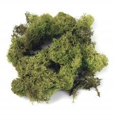 Musgo verde claro 30 g