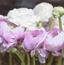 Servilletas de Flores y hojas