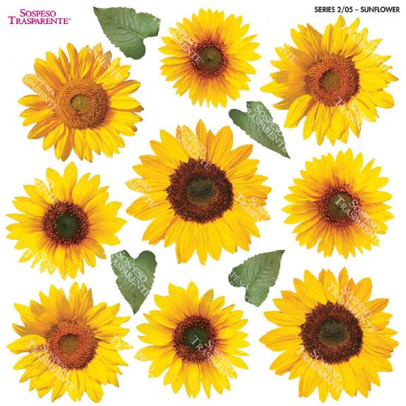 Sospeso transparente prediseñado Sunflower 23x23 cm