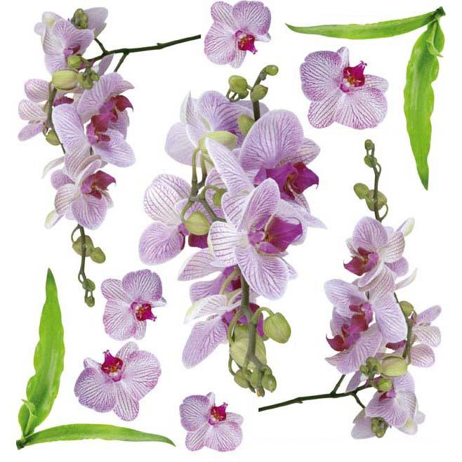 Sospeso transparente prediseñado Orchid Pink 23x23 cm