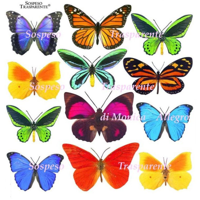 Sospeso transparente prediseñado Butterfly 23x23 cm