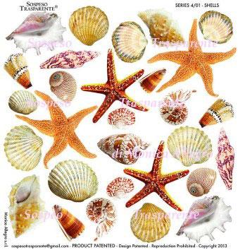 Sospeso transparente prediseñado Shells 23x23 cm