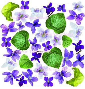 Sospeso prediseñado Violette 23x23 cm