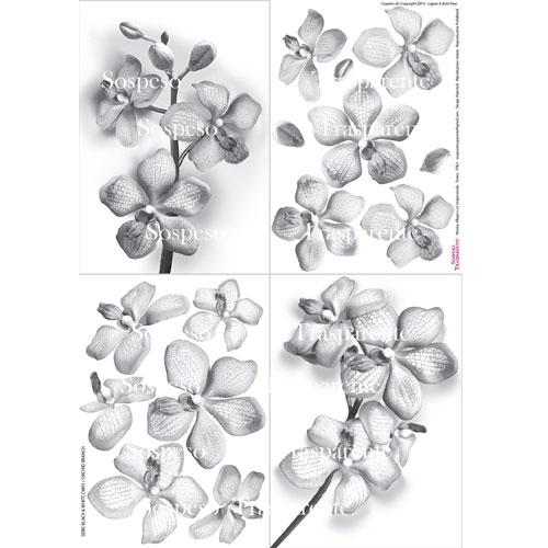 Orchid Branch decoupage paper 35x50 cm